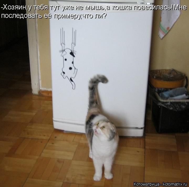 Котоматрица: -Хозяин,у тебя тут уже не мышь,а кошка повесилась!Мне последовать её примеру,что ли?