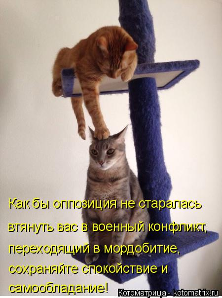 Котоматрица: Как бы оппозиция не старалась втянуть вас в военный конфликт, переходящий в мордобитие, сохраняйте спокойствие и  самообладание!