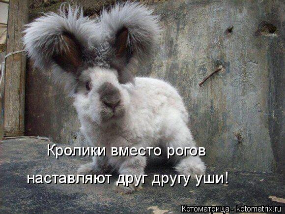 Котоматрица: Кролики вместо рогов наставляют друг другу уши!