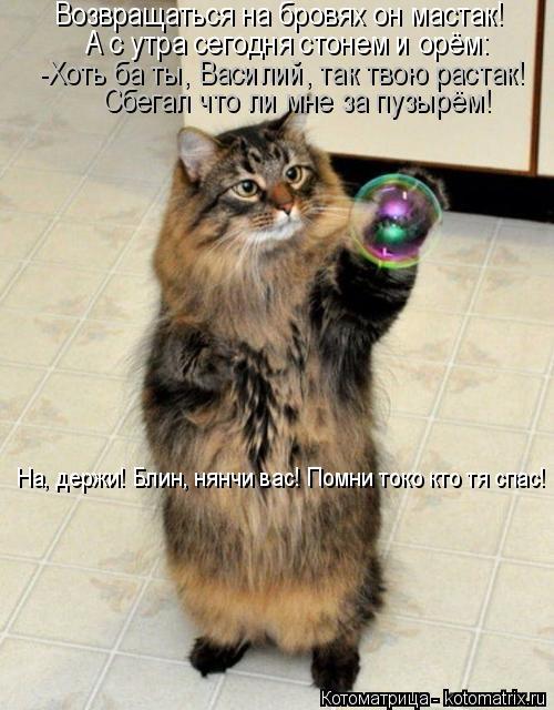 Котоматрица: Возвращаться на бровях он мастак! А с утра сегодня стонем и орём: -Хоть ба ты, Василий, так твою растак! Сбегал что ли мне за пузырём! На, держи!