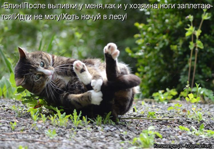 Котоматрица: -Блин!После выпивки у меня,как и у хозяина,ноги заплетаю- тся!Идти не могу!Хоть ночуй в лесу!