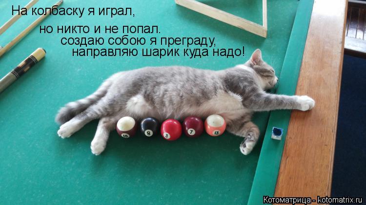 Котоматрица: На колбаску я играл, но никто и не попал.  создаю собою я преграду, направляю шарик куда надо!