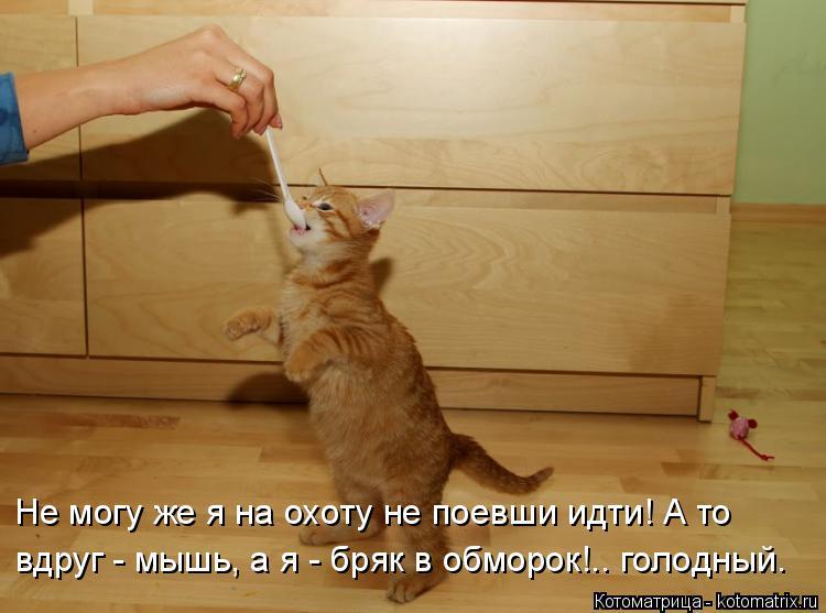 Котоматрица: Не могу же я на охоту не поевши идти! А то  вдруг - мышь, а я - бряк в обморок!.. голодный.