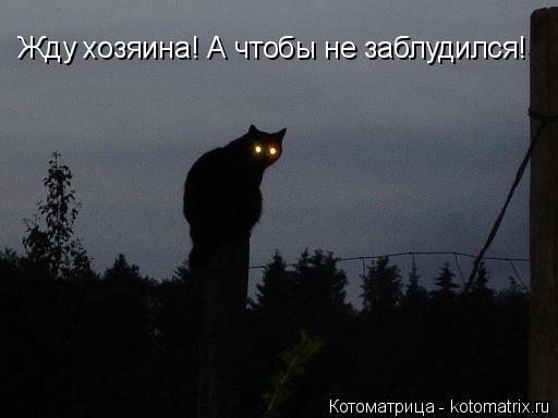 Котоматрица: Жду хозяина! А чтобы не заблудился!
