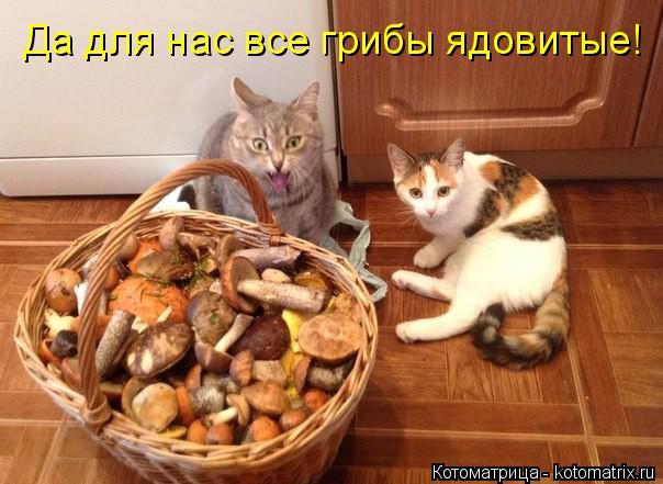 Котоматрица: Да для нас все грибы ядовитые!