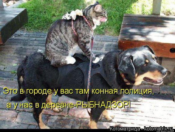 http://kotomatrix.ru/images/lolz/2014/09/04/kotomatritsa_i.jpg