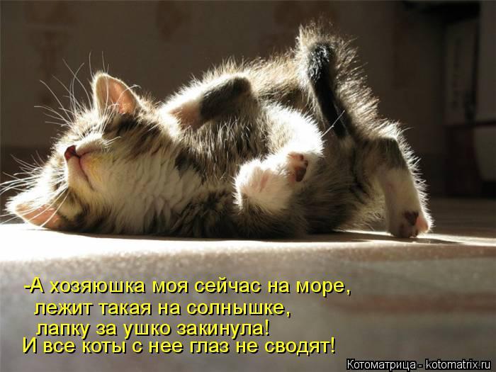 Котоматрица: -А хозяюшка моя сейчас на море, лежит такая на солнышке, лапку за ушко закинула! И все коты с нее глаз не сводят!