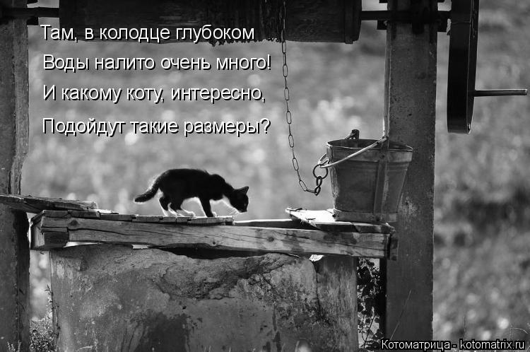 Котоматрица: Там, в колодце глубоком Воды налито очень много! И какому коту, интересно, Подойдут такие размеры?
