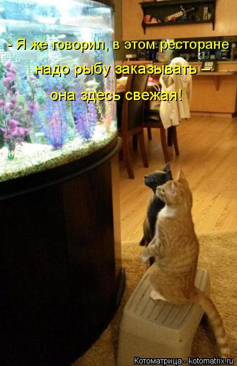 Котоматрица: - Я же говорил, в этом ресторане надо рыбу заказывать – она здесь свежая!