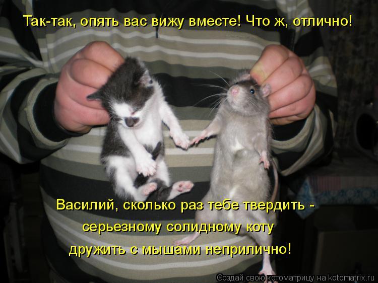 Котоматрица: Так-так, опять вас вижу вместе! Что ж, отлично! Василий, сколько раз тебе твердить -  серьезному солидному коту дружить с мышами неприлично!