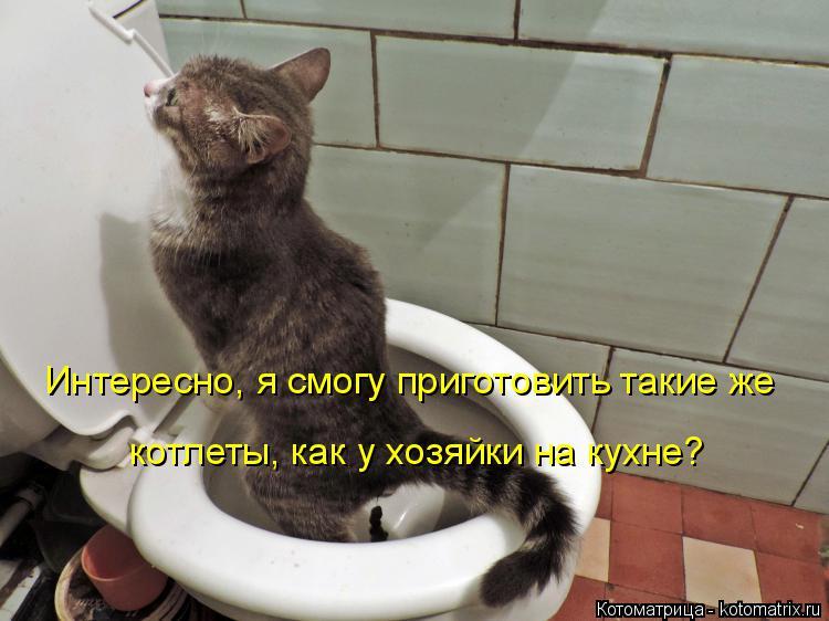 Котоматрица: Интересно, я смогу приготовить такие же котлеты, как у хозяйки на кухне?