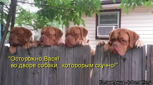 """Котоматрица: """"Осторожно,Вася! во дворе собаки,  которорым скучно!"""""""