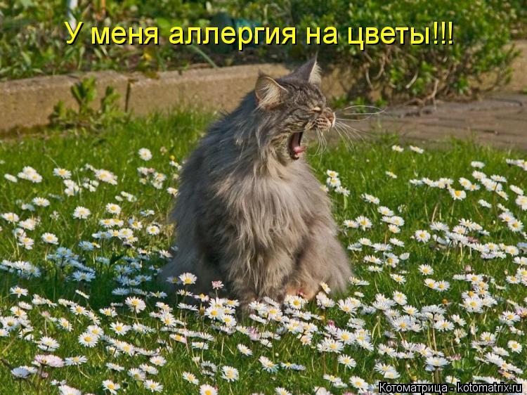 Котоматрица: У меня аллергия на цветы!!!