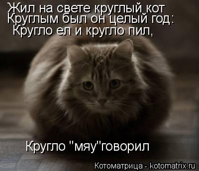 """Котоматрица: Жил на свете круглый кот Круглым был он целый год: Кругло ел и кругло пил, Кругло """"мяу""""говорил"""