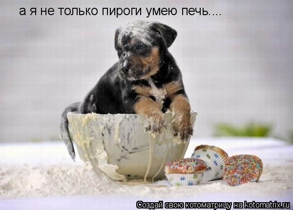 Котоматрица: а я не только пироги умею печь....