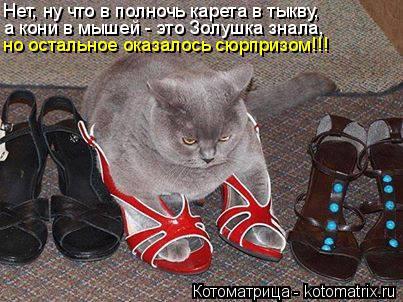 Котоматрица: Нет, ну что в полночь карета в тыкву, а кони в мышей - это Золушка знала, но остальное оказалось сюрпризом!!!