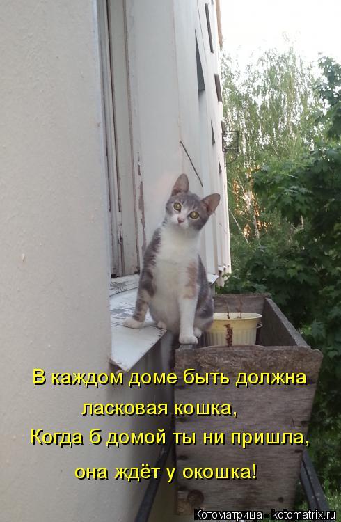 Котоматрица: В каждом доме быть должна Когда б домой ты ни пришла, ласковая кошка, она ждёт у окошка!