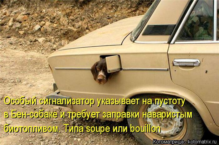 Котоматрица: Особый сигнализатор указывает на пустоту  в Бен-собаке и требует заправки наваристым  биотопливом. Типа soupe или bouillon