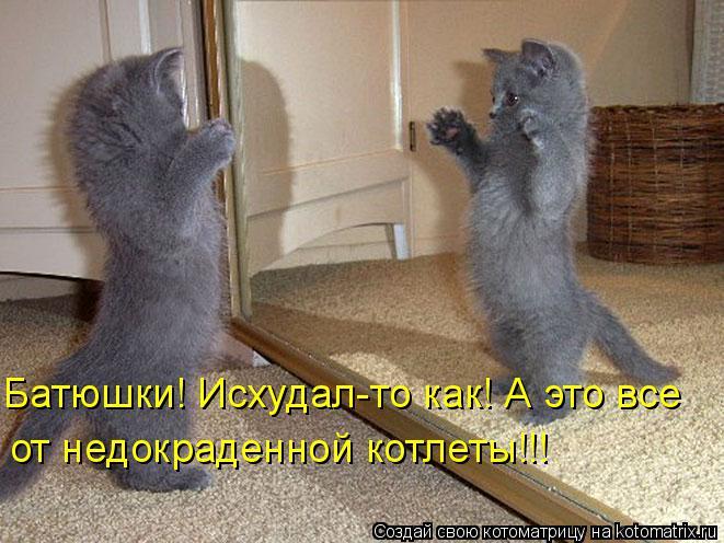 Котоматрица: Батюшки! Исхудал-то как! А это все от недокраденной котлеты!!!