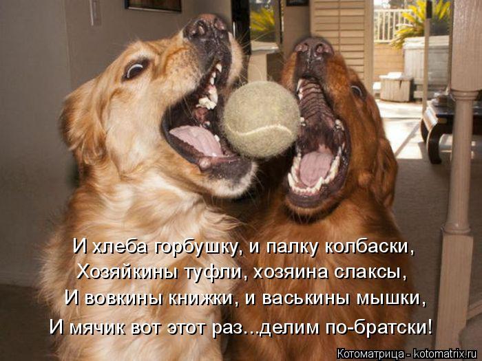 Котоматрица: И хлеба горбушку, и палку колбаски, Хозяйкины туфли, хозяина слаксы, И вовкины книжки, и васькины мышки, И мячик вот этот раз...делим по-братск