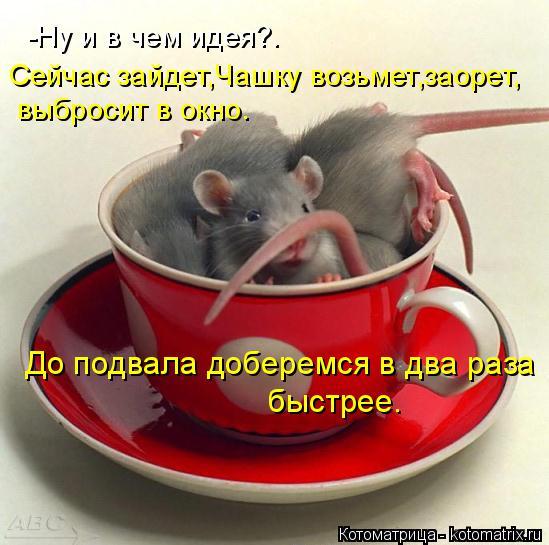 Котоматрица: -Ну и в чем идея?. Сейчас зайдет,Чашку возьмет,заорет, выбросит в окно. До подвала доберемся в два раза  быстрее.
