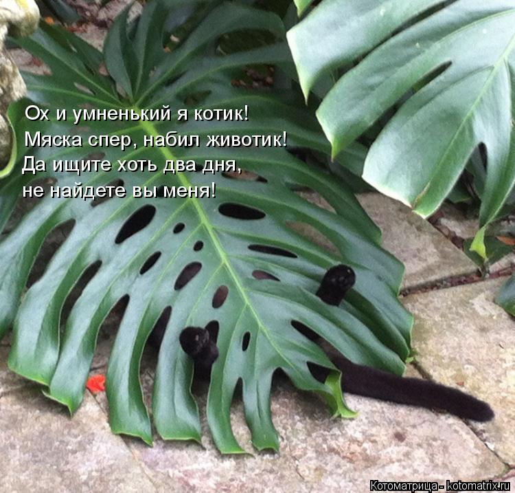 Котоматрица: Ох и умненький я котик! Мяска спер, набил животик!  Да ищите хоть два дня,  не найдете вы меня!