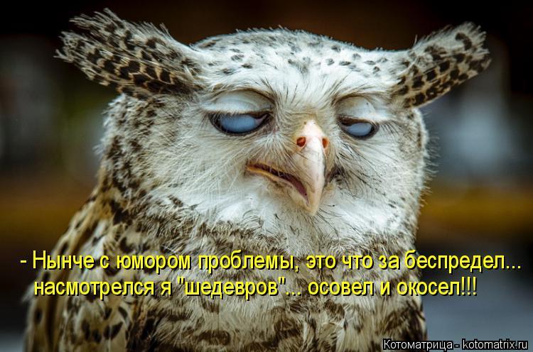 """Котоматрица: - Нынче с юмором проблемы, это что за беспредел... насмотрелся я """"шедевров""""... осовел и окосел!!!"""