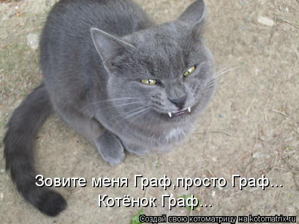 Котоматрица: Зовите меня Граф,просто Граф... Котёнок Граф...