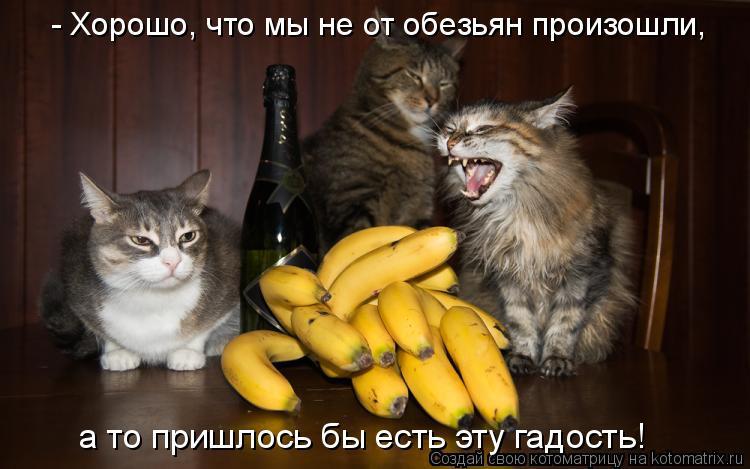 Котоматрица: - Хорошо, что мы не от обезьян произошли, а то пришлось бы есть эту гадость!
