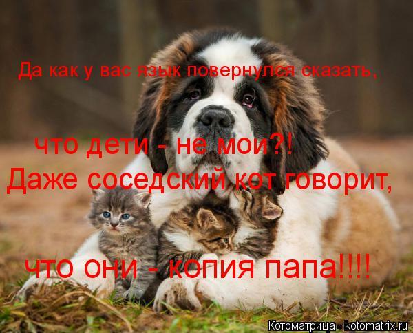 Котоматрица: Да как у вас язык повернулся сказать, что дети - не мои?! Даже соседский кот говорит,  что они - копия папа!!!!