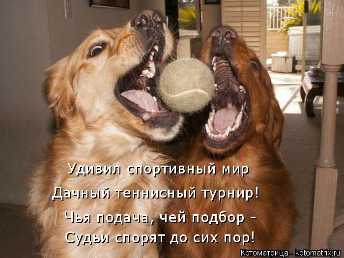 Котоматрица: Удивил спортивный мир  Дачный теннисный турнир! Чья подача, чей подбор - Судьи спорят до сих пор!