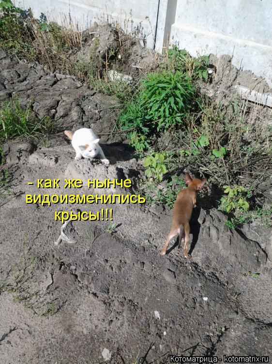 Котоматрица: - как же нынче видоизменились  крысы!!!