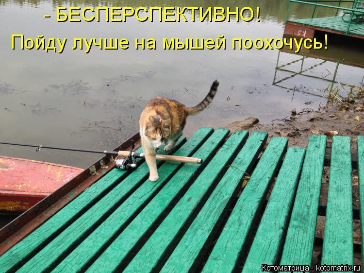 Котоматрица: - БЕСПЕРСПЕКТИВНО! Пойду лучше на мышей поохочусь!