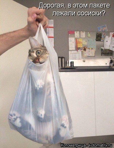 Котоматрица: Дорогая, в этом пакете лежали сосиски?
