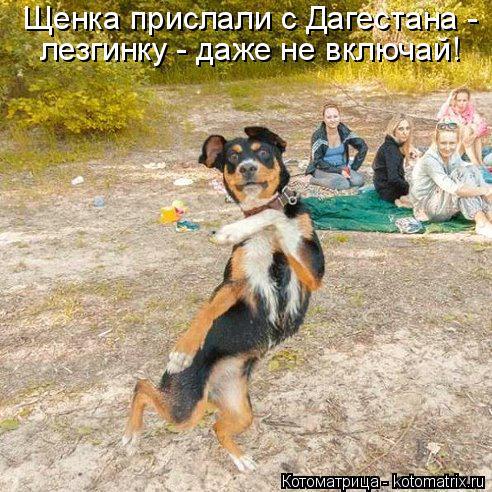 Котоматрица: Щенка прислали с Дагестана -  лезгинку - даже не включай!