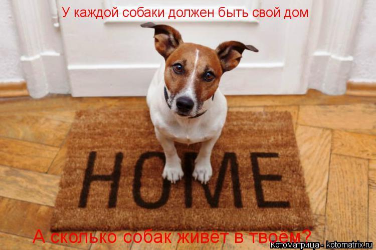 Котоматрица: У каждой собаки должен быть свой дом А сколько собак живёт в твоём?