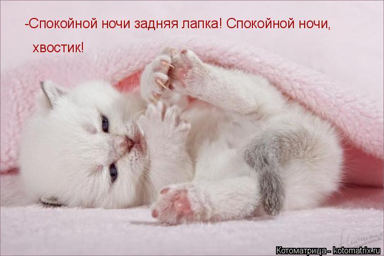 Котоматрица: -Спокойной ночи задняя лапка! Спокойной ночи,  хвостик!