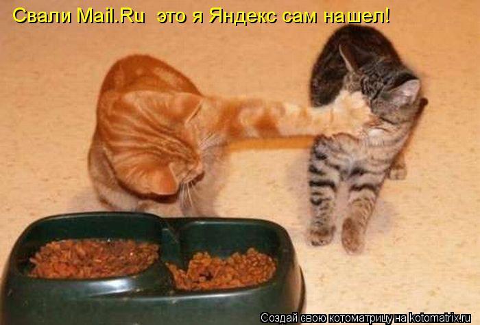 Котоматрица: Свали Mail.Ru  это я Яндекс сам нашел!