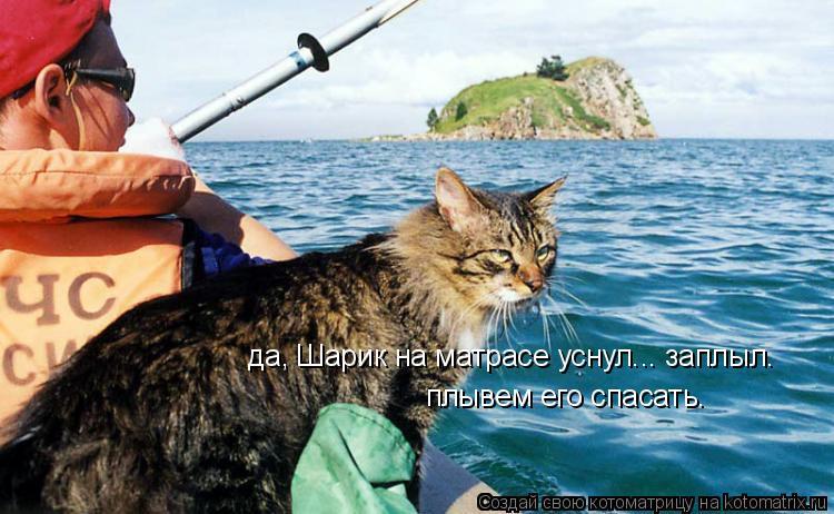 Котоматрица: да, Шарик на матрасе уснул... заплыл. плывем его спасать.