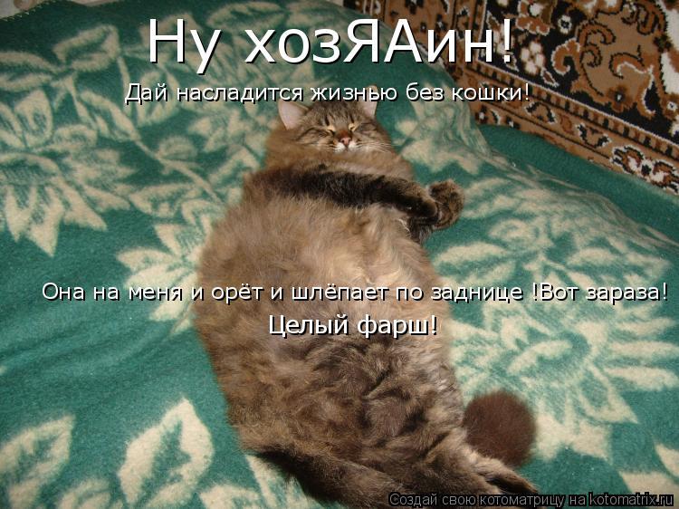 Котоматрица: Ну хозЯАин! Дай насладится жизнью без кошки! Она на меня и орёт и шлёпает по заднице !Вот зараза! Целый фарш!