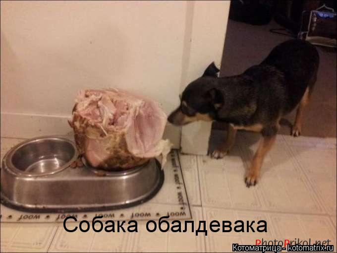 Котоматрица: Собака обалдевака