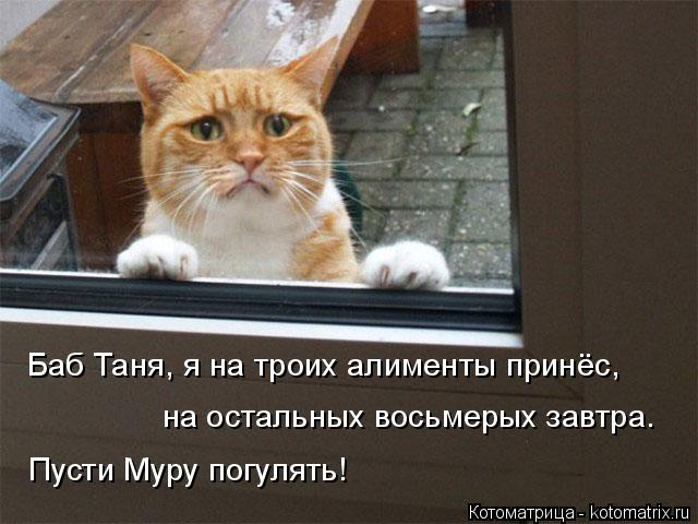 Котоматрица: Баб Таня, я на троих алименты принёс,  на остальных восьмерых завтра.  Пусти Муру погулять!