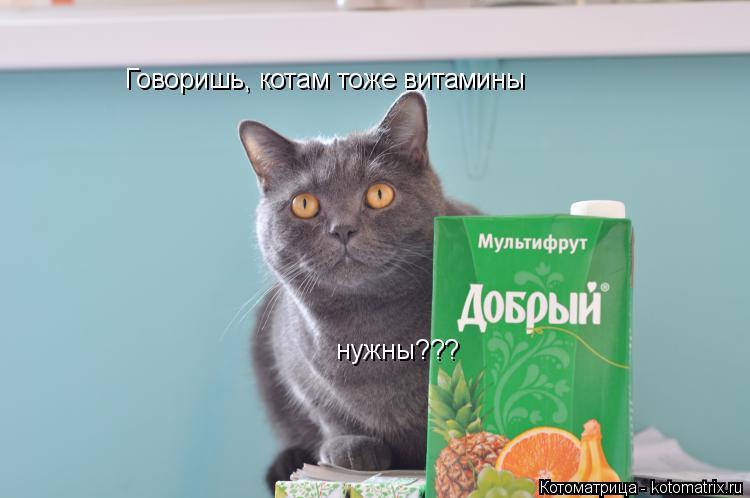 Котоматрица: нужны??? Говоришь, котам тоже витамины