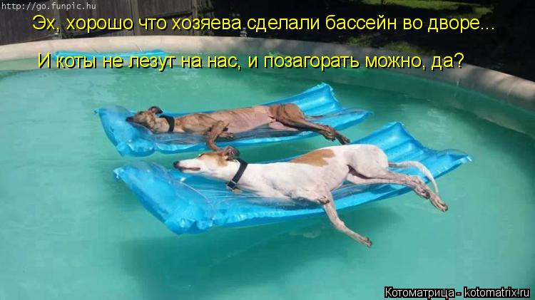 Котоматрица: Эх, хорошо что хозяева сделали бассейн во дворе... И коты не лезут на нас, и позагорать можно, да? И коты не лезут на нас, и позагорать можно, да?