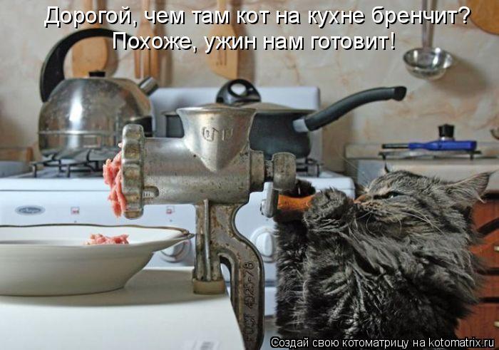 Котоматрица: Дорогой, чем там кот на кухне бренчит? Похоже, ужин нам готовит!