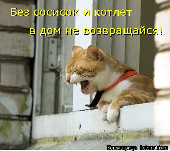 Котоматрица: Без сосисок и котлет в дом не возвращайся!