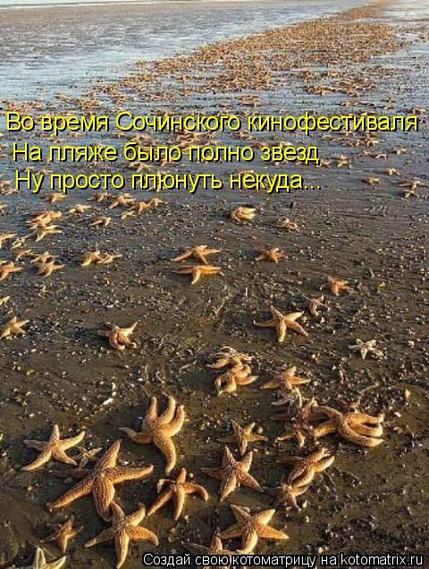 Котоматрица: Во время Сочинского кинофестиваля На пляже было полно звезд Ну просто плюнуть некуда...