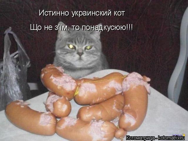 Котоматрица: Истинно украинский кот Що не з'їм, то понадкусюю!!!
