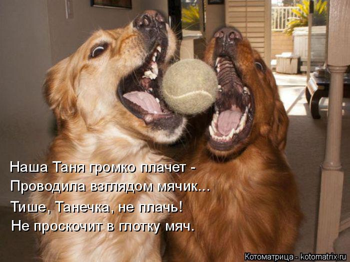 Котоматрица: Наша Таня громко плачет - Проводила взглядом мячик... Тише, Танечка, не плачь! Не проскочит в глотку мяч.