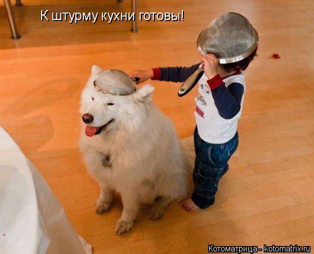 Котоматрица: К штурму кухни готовы!